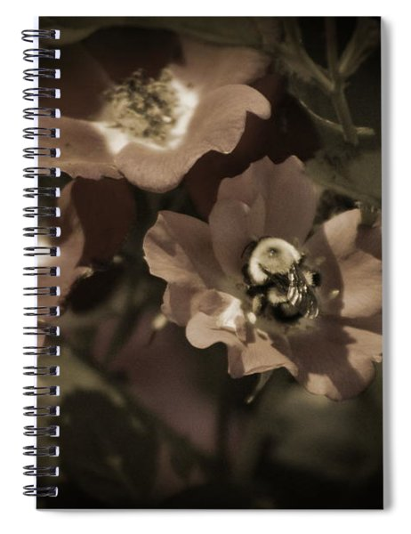 Bumblebee On Blush Country Rose In Sepia Tones Spiral Notebook