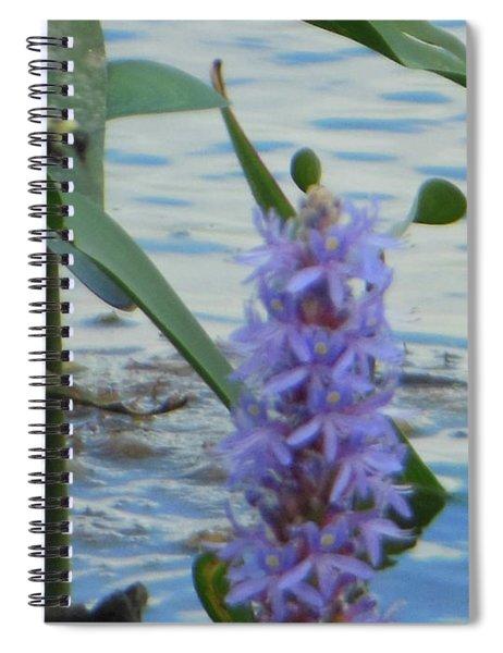 Bumblebee Pickerelweed Moth Spiral Notebook