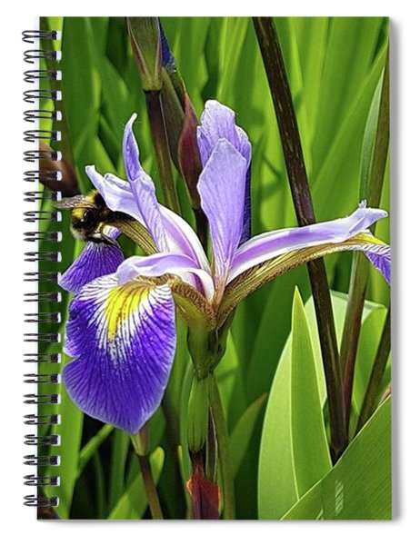 Bee Dreams  Spiral Notebook