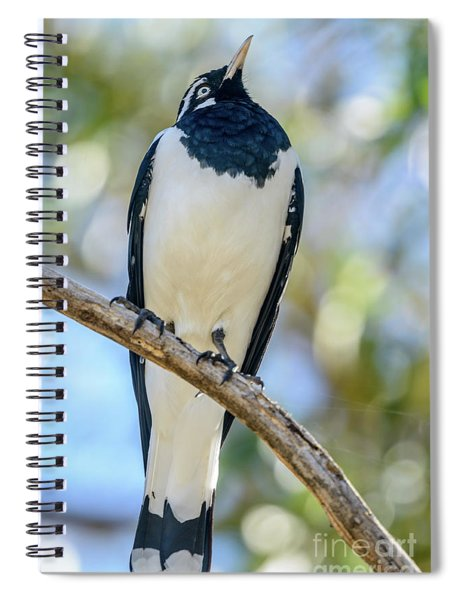 Butcherbird 01 Spiral Notebook