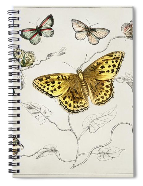 Butterflies From A History Of The Earth And Animated Nature Spiral Notebook