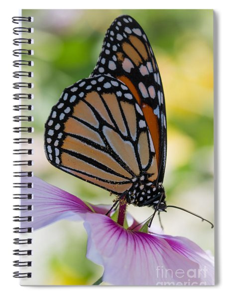 Butterfly And Hibiscus Spiral Notebook