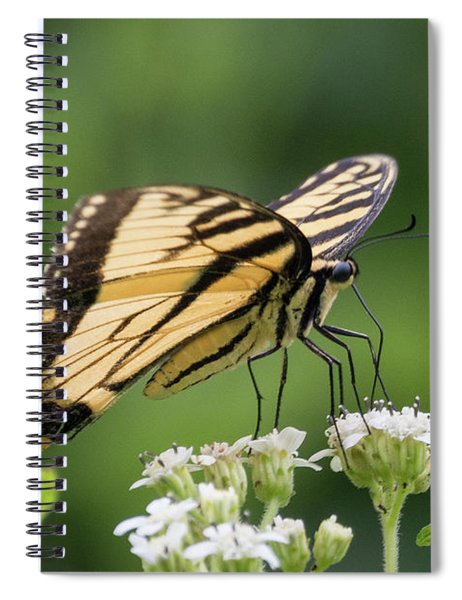 Butterfly Drinking Spiral Notebook
