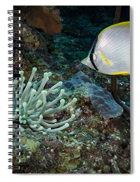 Butterfly Fish At Cleaning Station Spiral Notebook