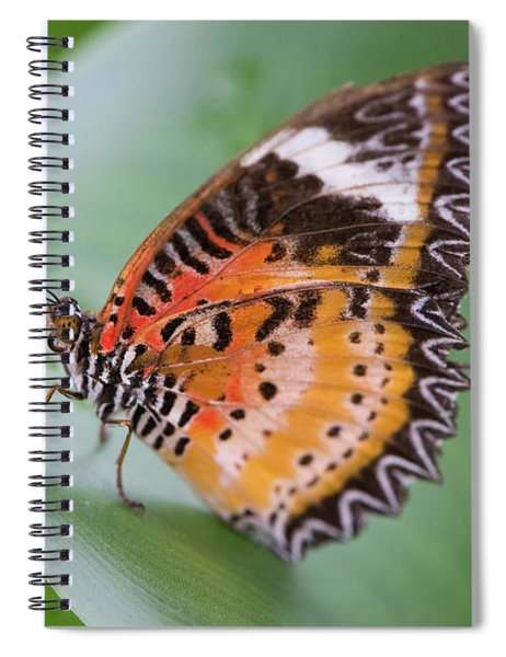 Butterfly On The Edge Of Leaf Spiral Notebook by John Wadleigh