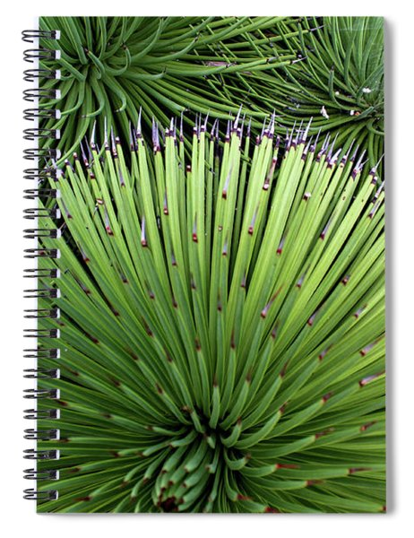 Cacti Composition Spiral Notebook
