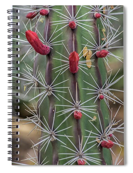Cactus Needles 5930-041118-1 Spiral Notebook