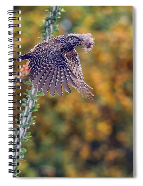 Cactus Wren With Nesting Material 4543-040418-1cr Spiral Notebook
