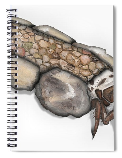 Caddisfly Larva Nymph Goeridae_silo_pallipes -  Spiral Notebook