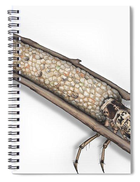 Caddisfly Limnephilidae Anabolia Nervosea Larva Nymph -  Spiral Notebook