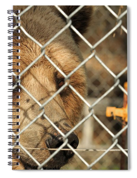 Caged Bear Spiral Notebook