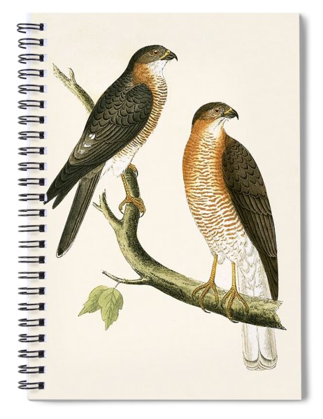 Calcutta Sparrow Hawk Spiral Notebook