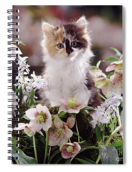 Calico And Scillas Spiral Notebook