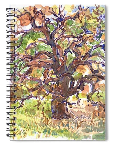 California Oak In Winter Spiral Notebook