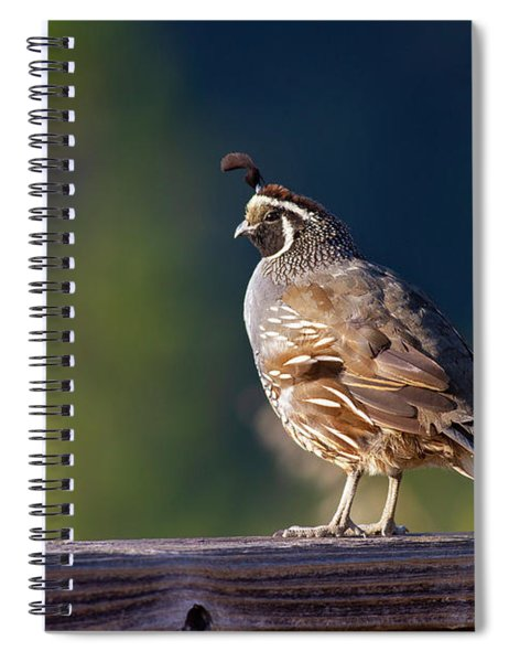 California Quail Spiral Notebook