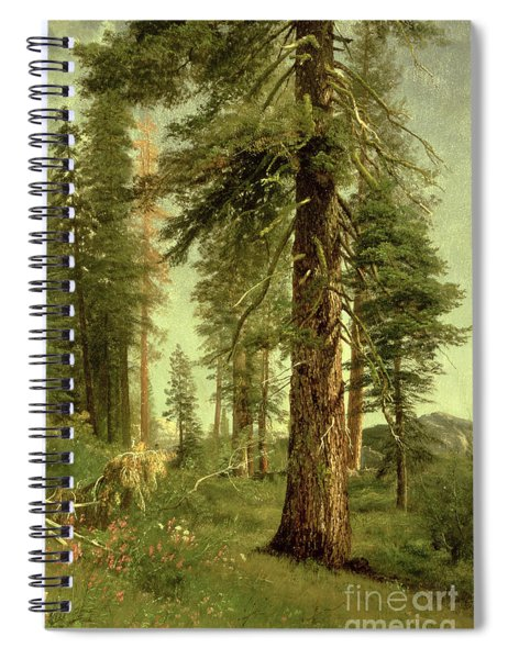 California Redwoods Spiral Notebook