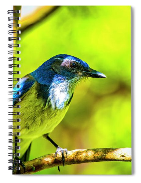 California Scrub Jay Spiral Notebook