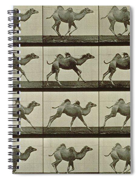 Camel Spiral Notebook