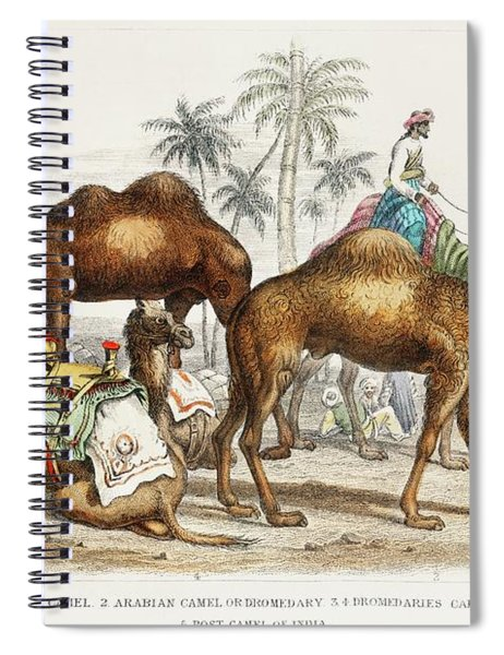 Camels From A History Of The Earth And Animated Nature Spiral Notebook