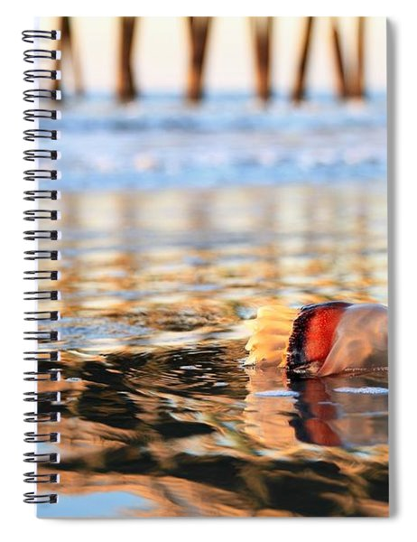 Cannonball Jellyfish Beached Spiral Notebook