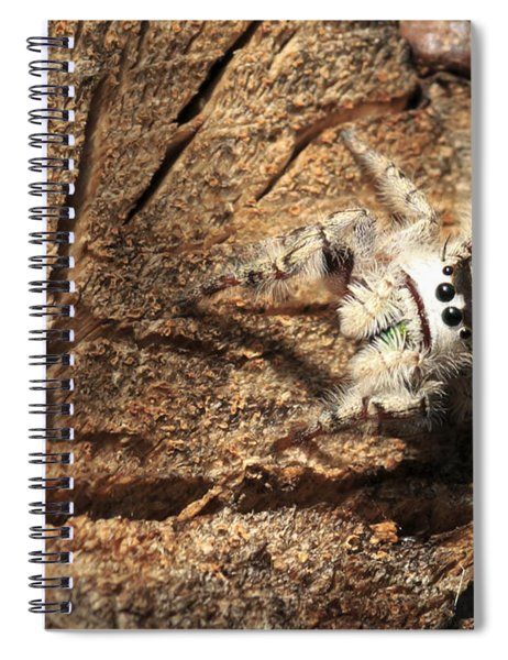Canopy Jumping Spider Spiral Notebook