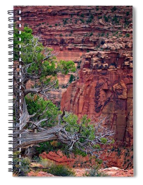 Canyonlands Juniper Spiral Notebook
