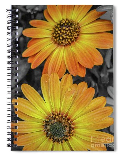 Cape Daisy's - Orange Spiral Notebook