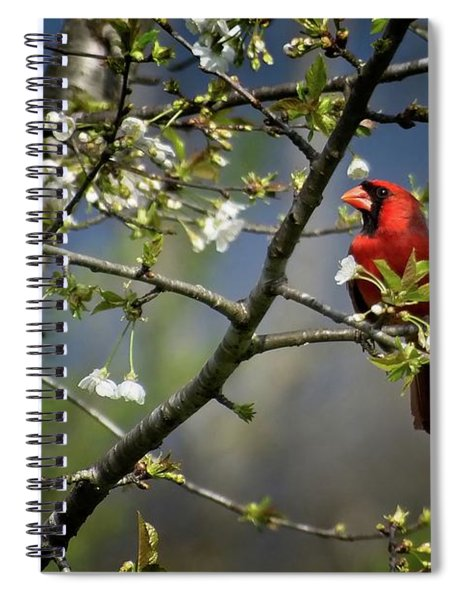 Cardinal Among The Blossoms Spiral Notebook