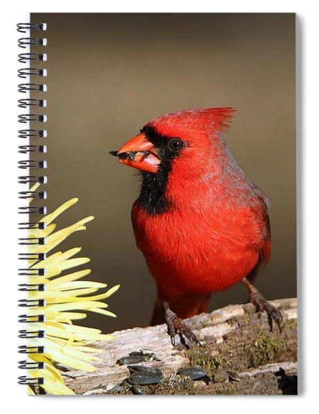 Cardinal And Chrysanthemums Spiral Notebook