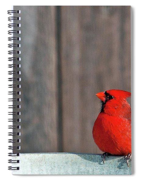 Spiral Notebook featuring the photograph Cardinal Drinking by Edward Peterson