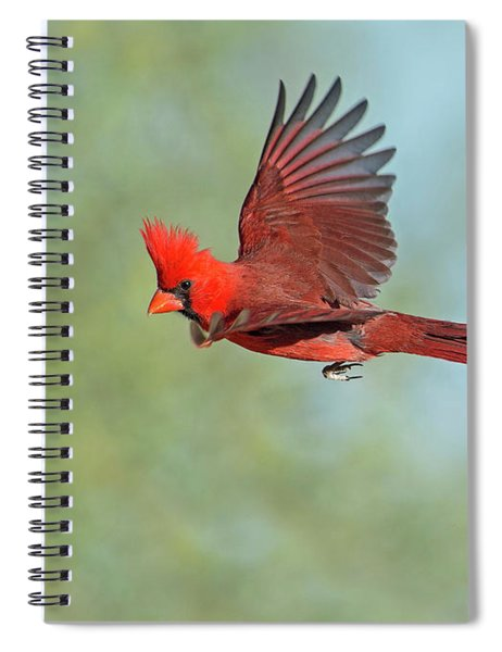 Cardinal On A Mission Spiral Notebook