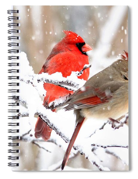 Cardinals In The Winter Spiral Notebook