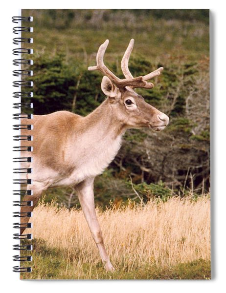 Caribou Spiral Notebook