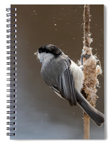 Carolina Chickadee Feeding On Cattail Spiral Notebook