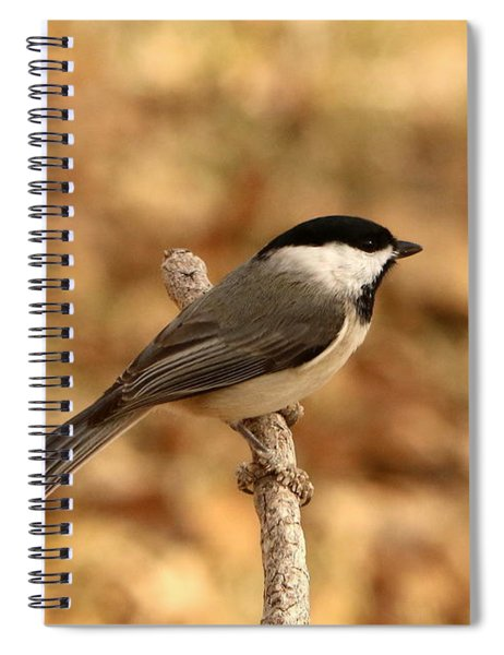 Carolina Chickadee On Branch Spiral Notebook