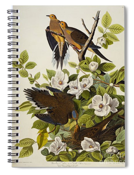 Carolina Turtledove Spiral Notebook