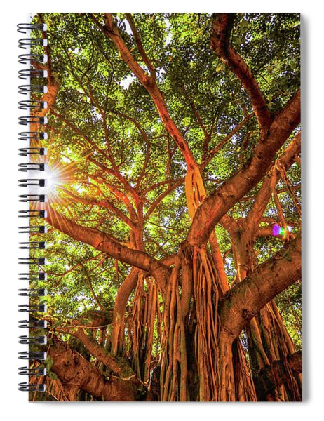 Catch A Sunbeam Under The Banyan Tree Spiral Notebook