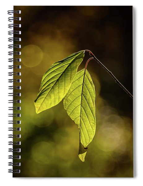 Caught In The Light Spiral Notebook