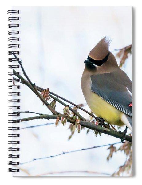 Cedar Waxwing 03 Spiral Notebook