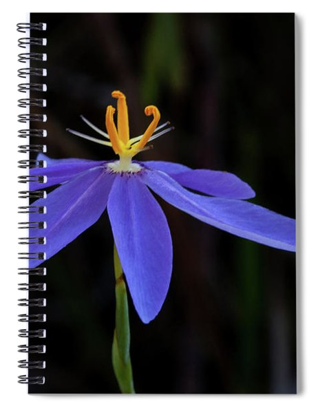 Celestial Lily Spiral Notebook