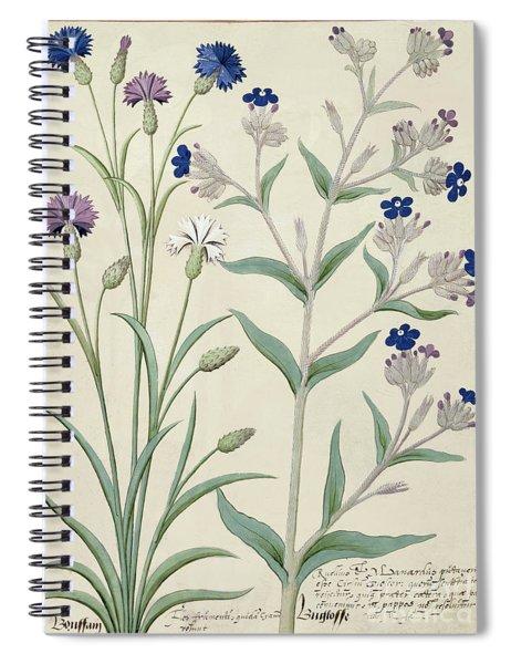 Centaurea Montana And Cornflowers Spiral Notebook