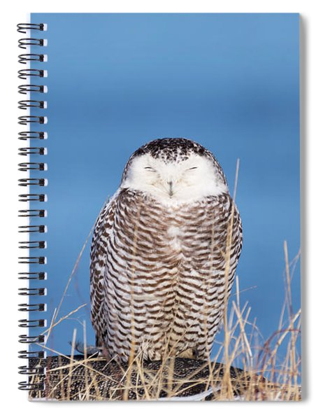 Centered Snowy Owl Spiral Notebook