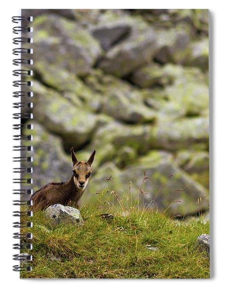 Chamois Calf Spiral Notebook