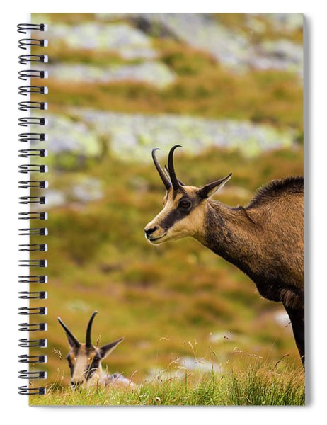 Chamois In Slovakia Spiral Notebook