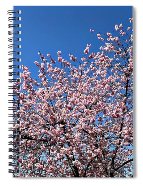 Cherry Blossom Pink And Blue Spring Colors Spiral Notebook