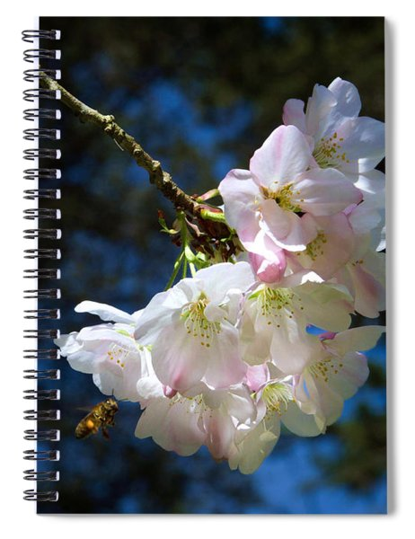 Cherry Blossoms And Bee Spiral Notebook