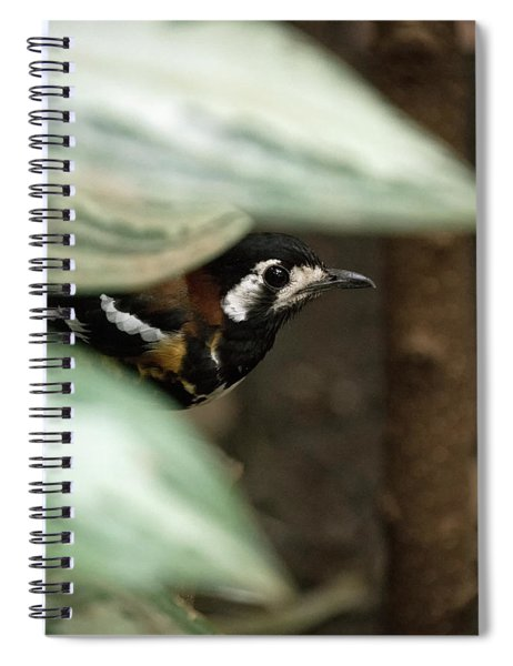 Chestnut-backed Thrush Spiral Notebook