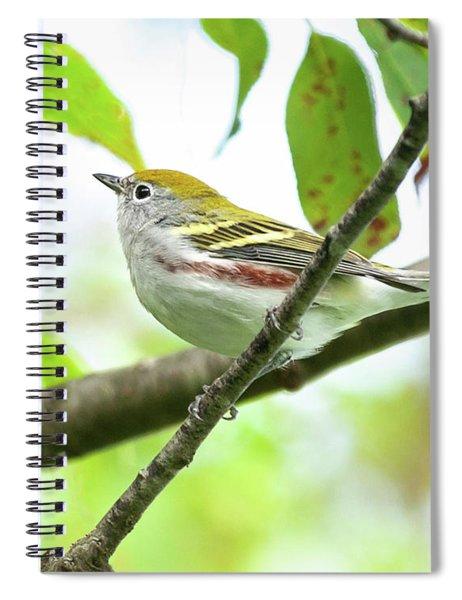 Chestnut-sided Warbler Spiral Notebook