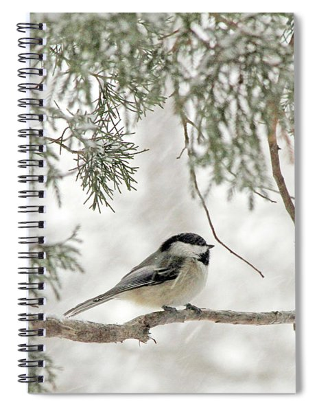 Chicadee In A Snow Storm  Spiral Notebook