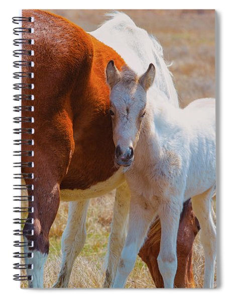 Chincoteague Mare And Foal Spiral Notebook